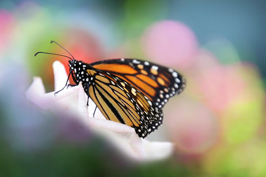 Butterfly Garden by Diana Haronis