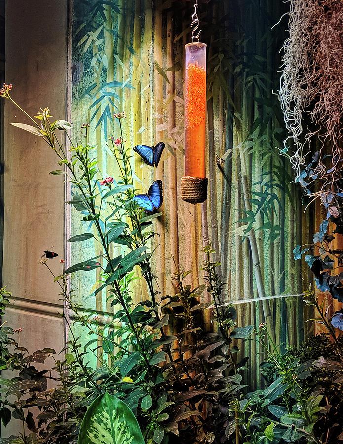 Butterfly Garden by Portia Olaughlin