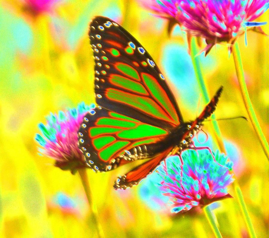 Butterfly Green Photograph