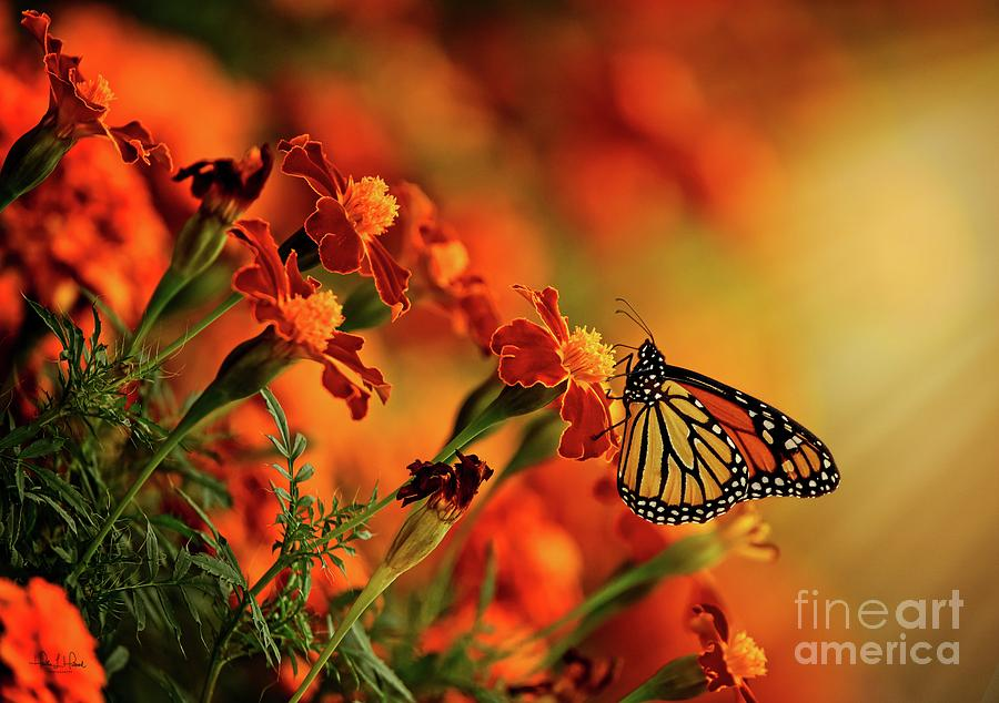 Butterfly Photograph by Heather Hubbard