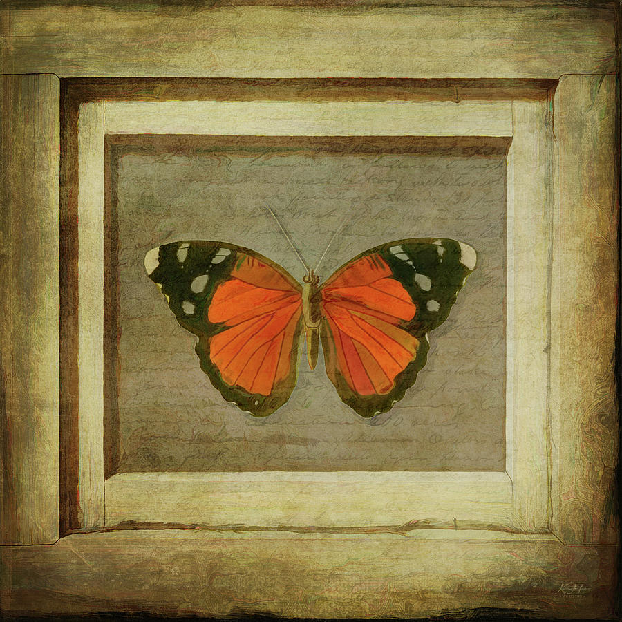 Butterfly in a Frame by Keith Hawley