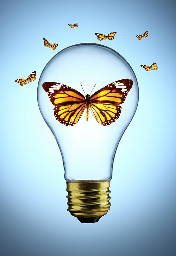 Butterfly In A Lightbulb Photograph by Chris Stein