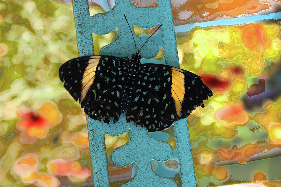 Butterfly in August by Diane Lindon Coy
