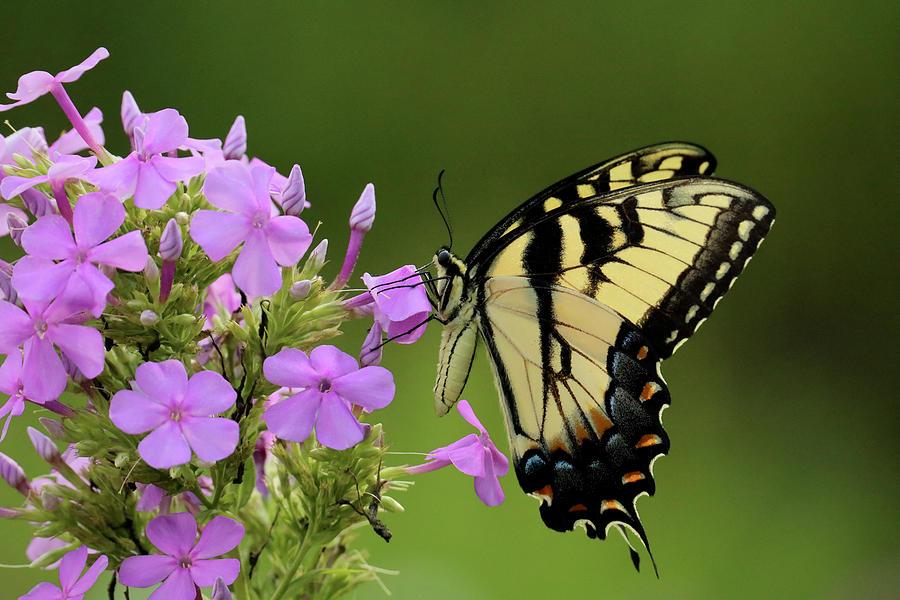 Butterfly in the Garden by Rachel Morrison