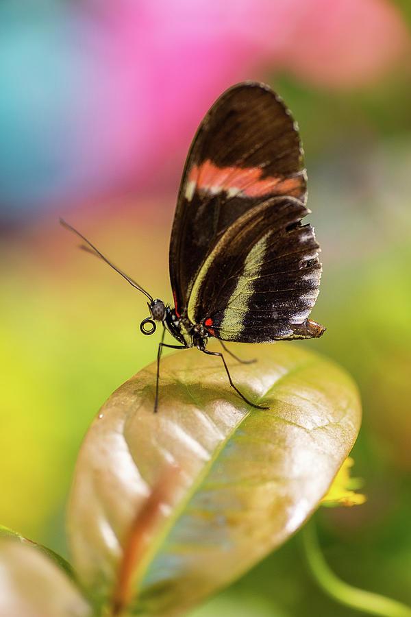 Butterfly by John Randazzo