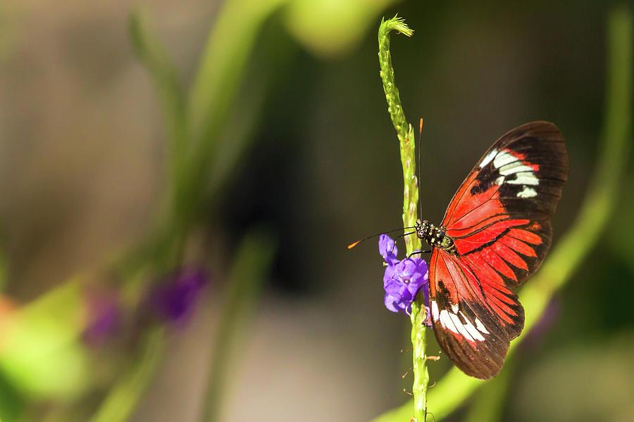 Butterfly Landing on Purple Flower by Dorothy Cunningham