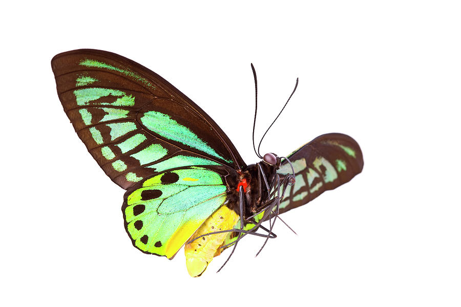 Butterfly Photograph by Liliboas