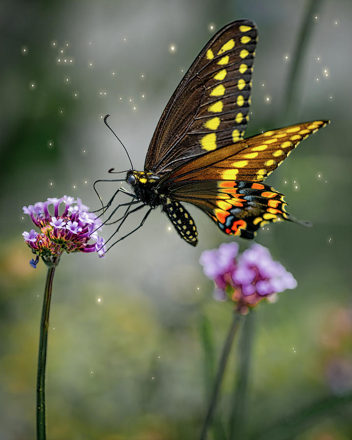 Butterfly Magic by Chris Lord