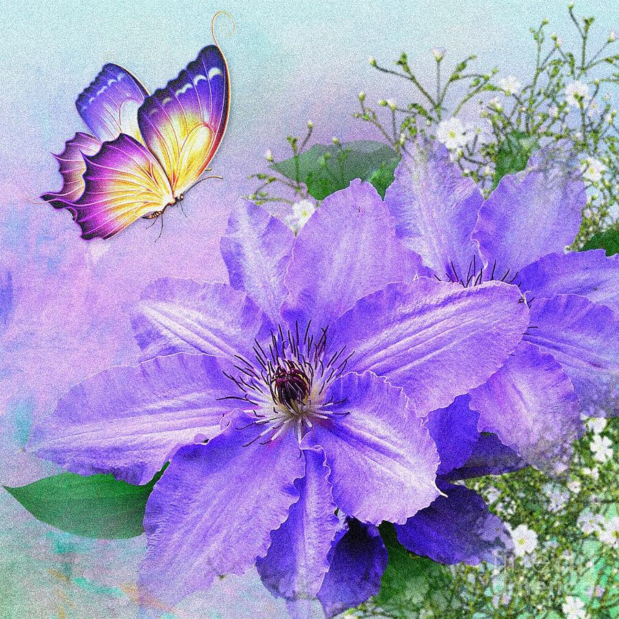 Butterfly on Clematis by Morag Bates