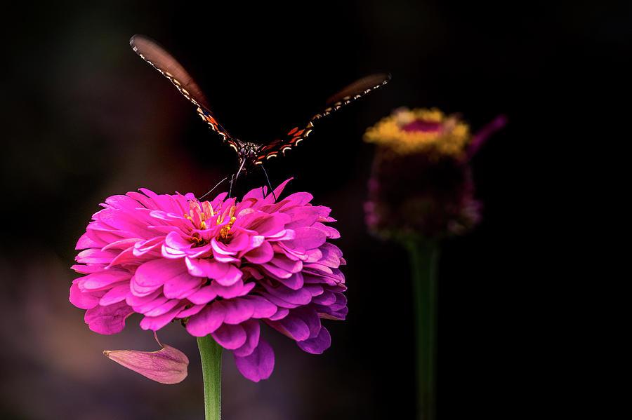 Butterfly On Edge by Allin Sorenson