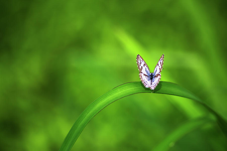 Butterfly on green by Vishwanath Bhat
