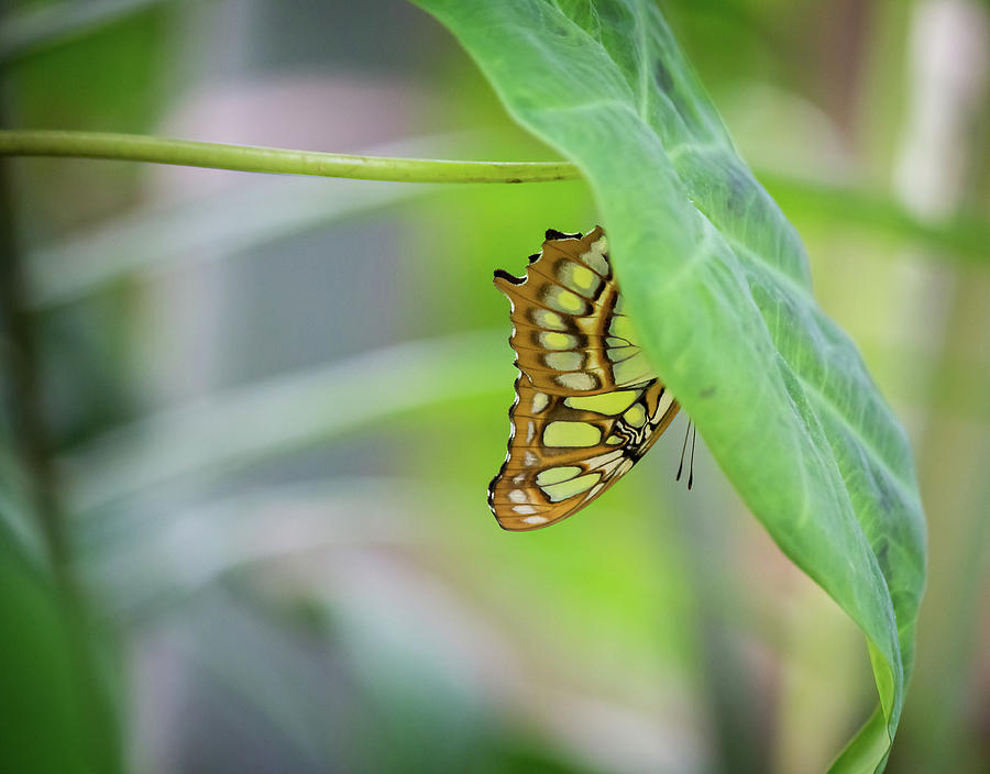 Butterfly on Leaf by Angel Sharum