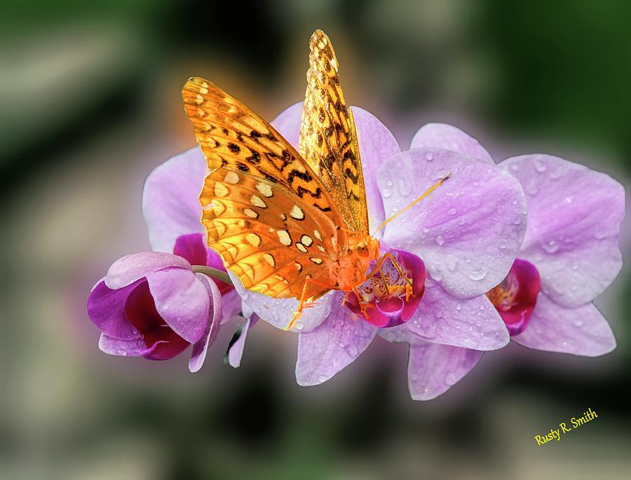 Butterfly on purple orchid. by Rusty R Smith
