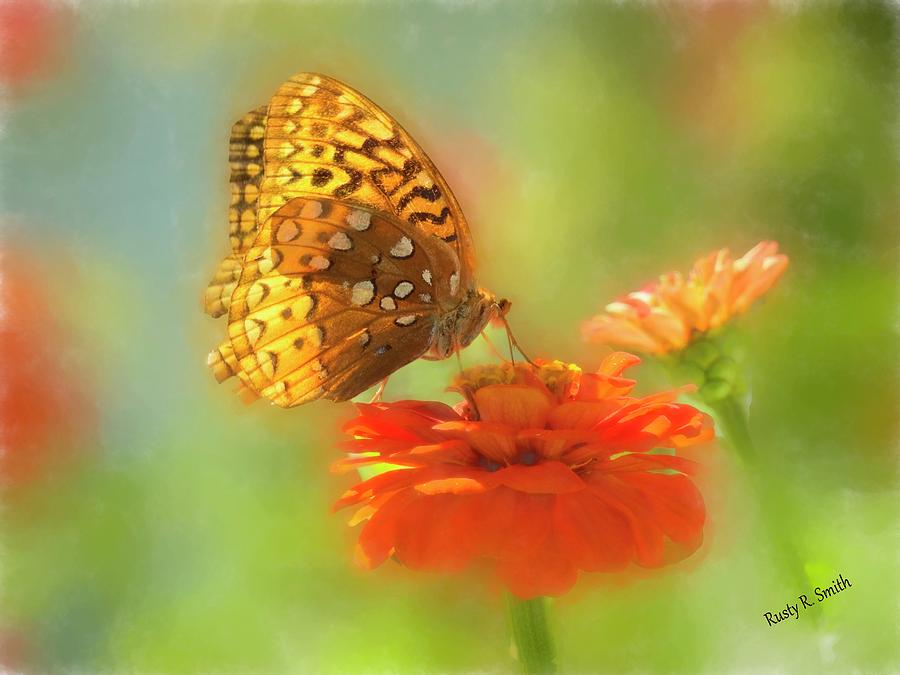 Butterfly on red flower by Rusty R Smith