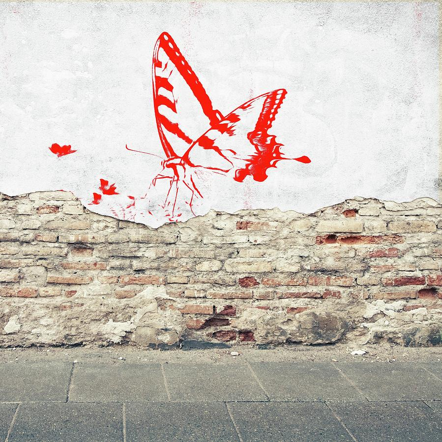 Butterfly on the Wall by Sarah Hanley