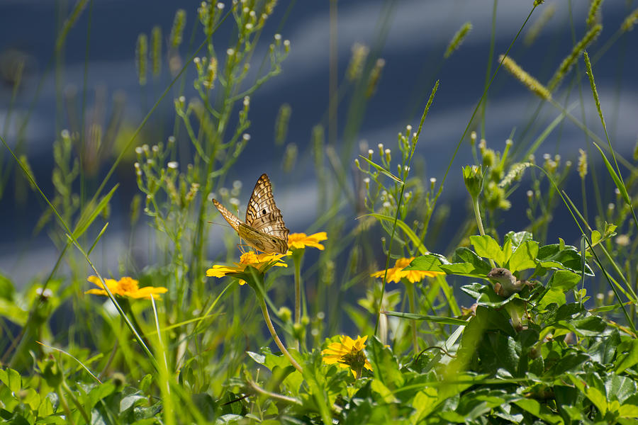 Butterfly on wild flower and lizard watching by Zina Stromberg