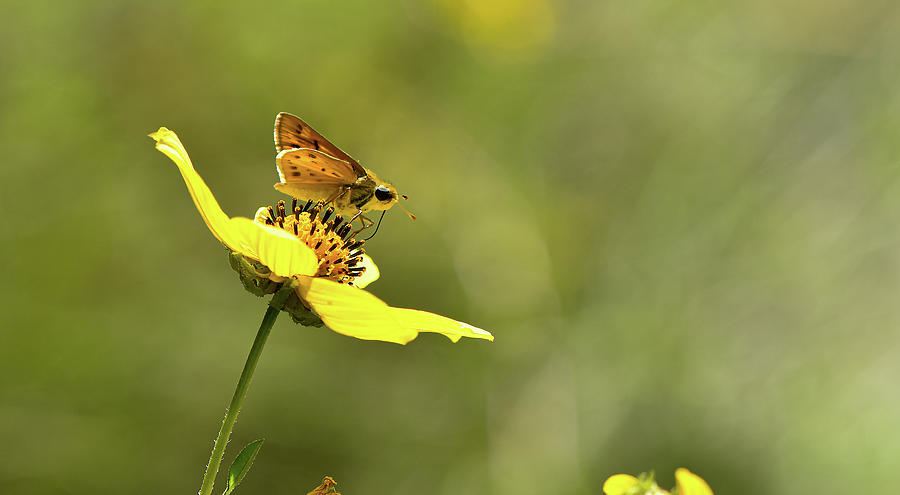 Butterfly on Yellow Flower by Karen Rispin