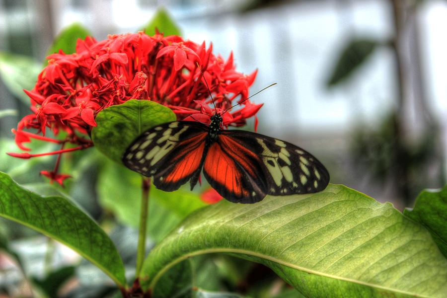 Butterfly One by Brian Cole