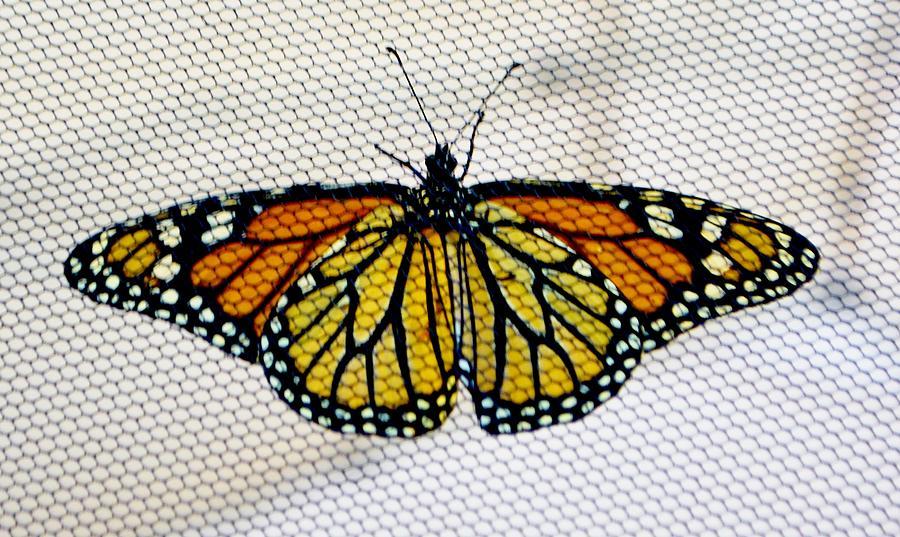 Butterfly Prison by Eileen Brymer