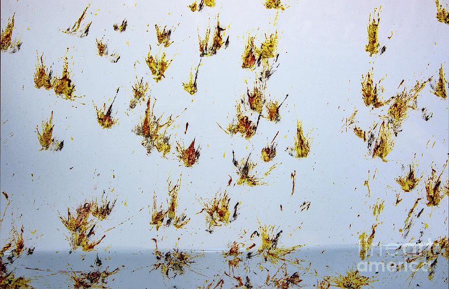 Butterfly Splash Photograph by Mae Wertz