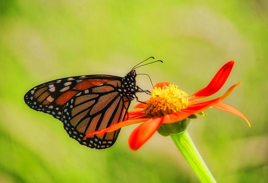 Butterfly by Suguna Ganeshan