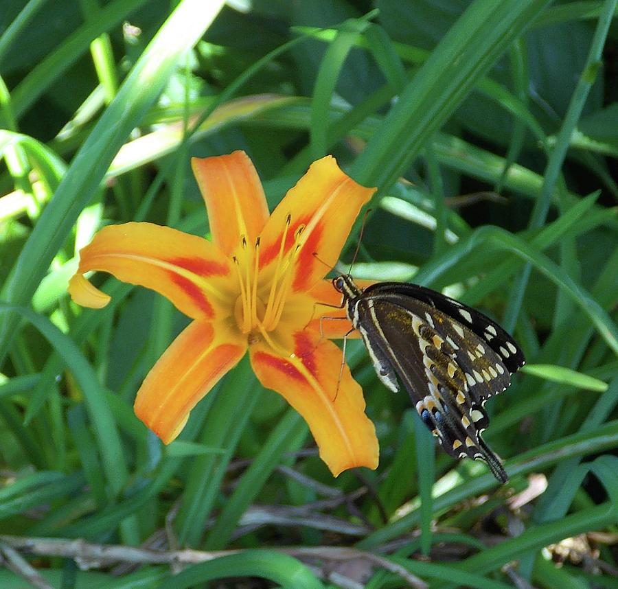 Butterfly Sunday by Matthew Seufer