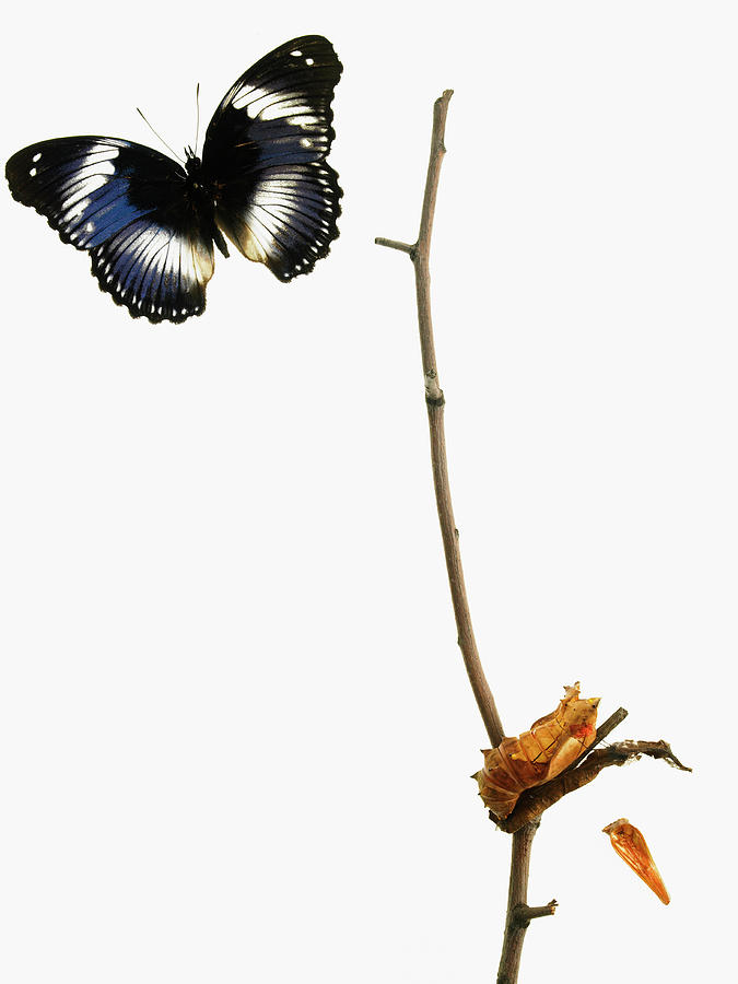 Butterfly Transformation Photograph by David Arky