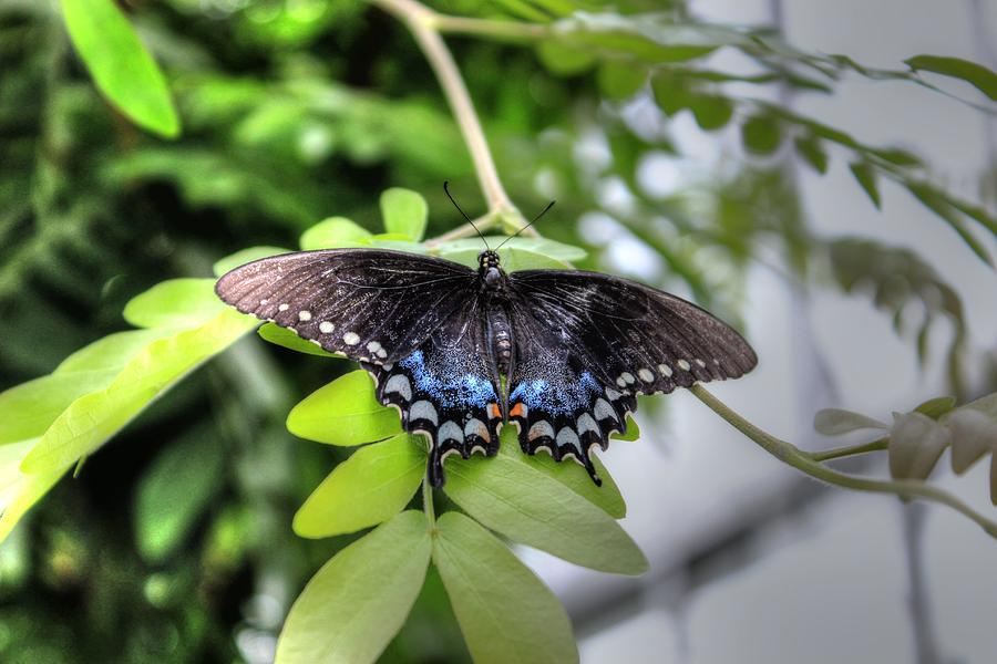 Butterfly Two by Brian Cole