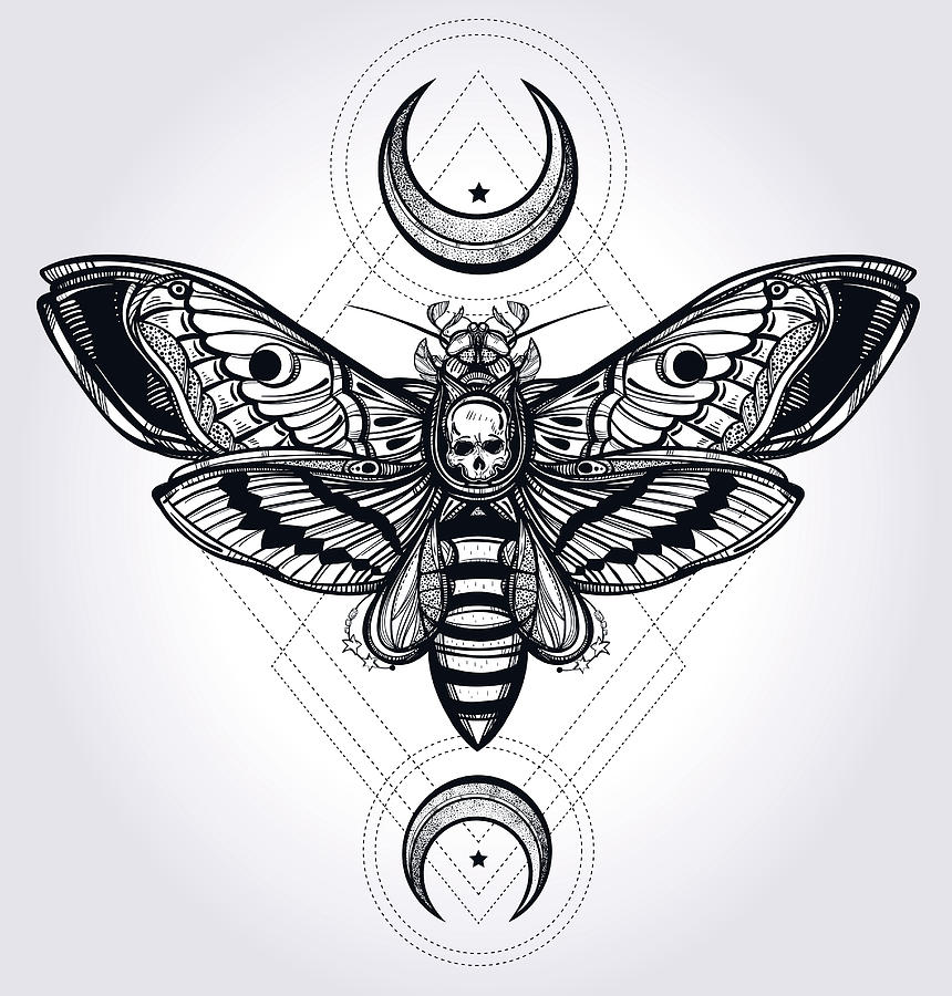 Butterfly Digital Art - Butterfly - Vector by Caids Ados