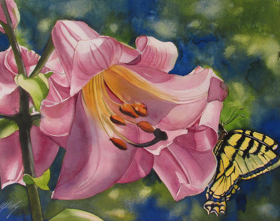 butterfly visit by Alfred Ng