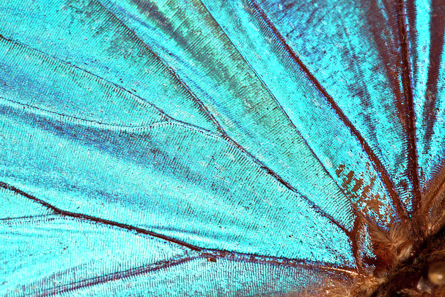 Butterfly Wing Background Photograph by Jodijacobson