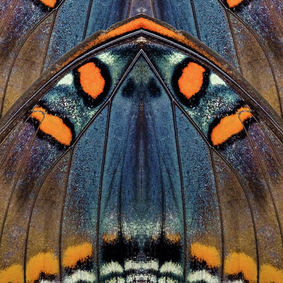 Butterfly Wing One by Glenn DiPaola