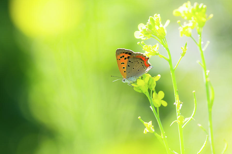 Butterfly Photograph by Yuji Takahashi