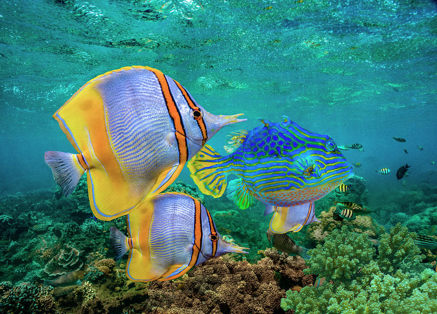 Butterflyfish And Horned Boxfish, Coral by Tim Fitzharris