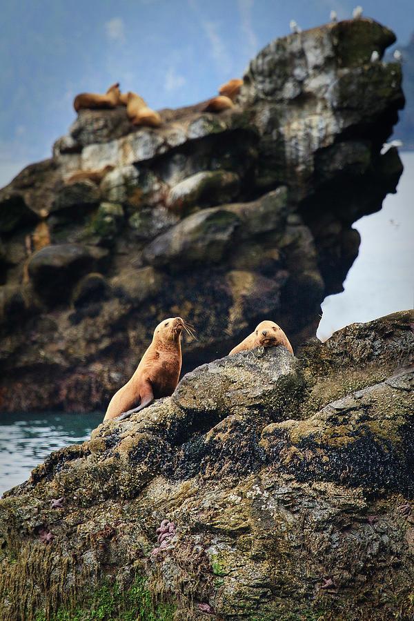Buy Sea Lion For $10.99 Photograph by Daniel Cummins