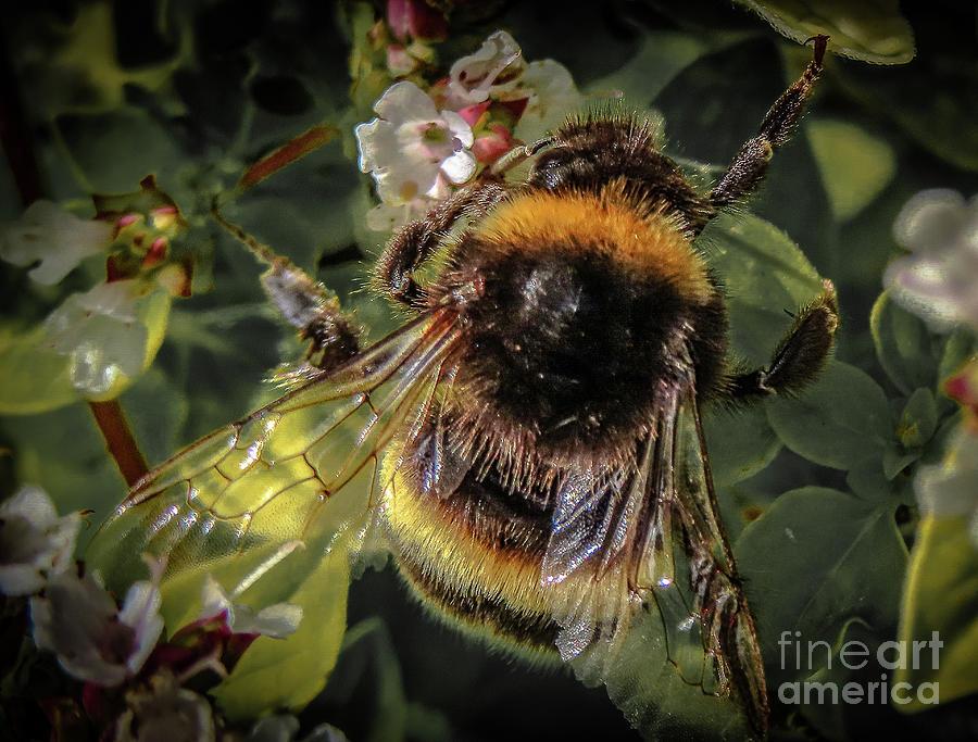 Buzzing around by Mandi Hibberd