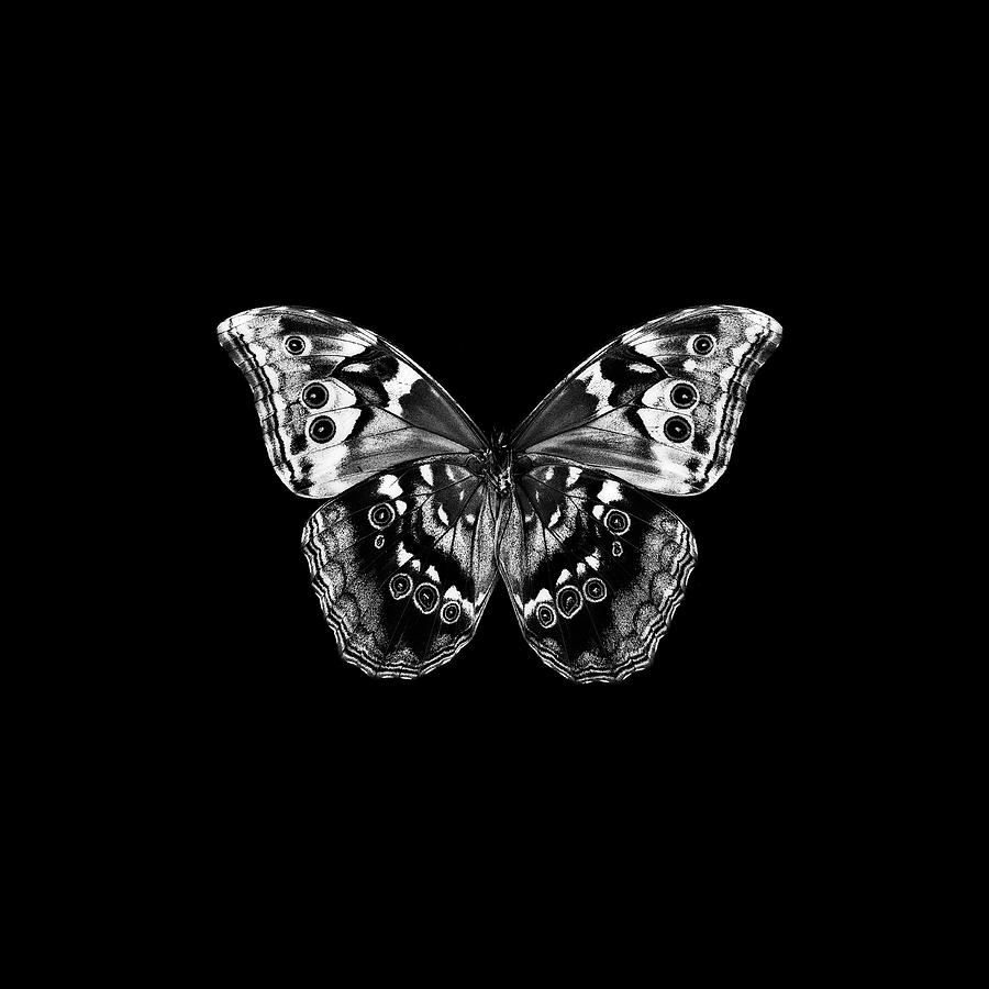 Butterfly Photograph - Bw Butterfly On Black by Tom Quartermaine