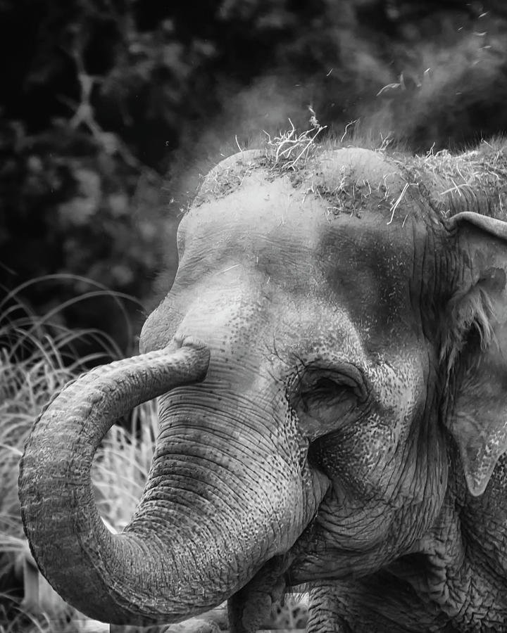 BWElephant by Chris Boulton