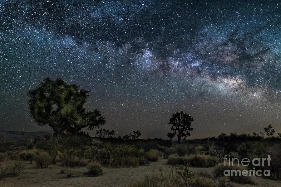 California Photograph - By The Joshua Tree by Imma Barrera