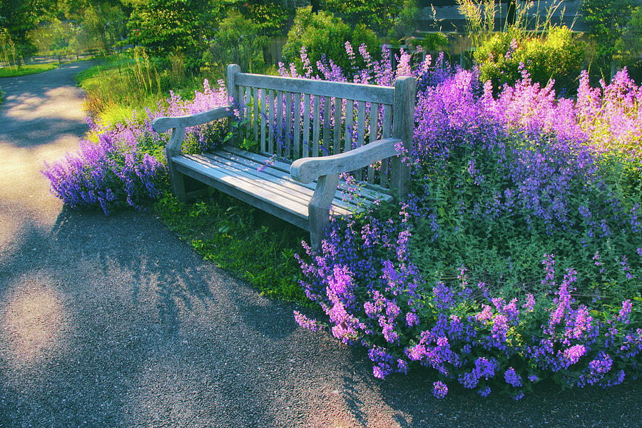 Lavender Photograph - Lovely Lavender by Jessica Jenney