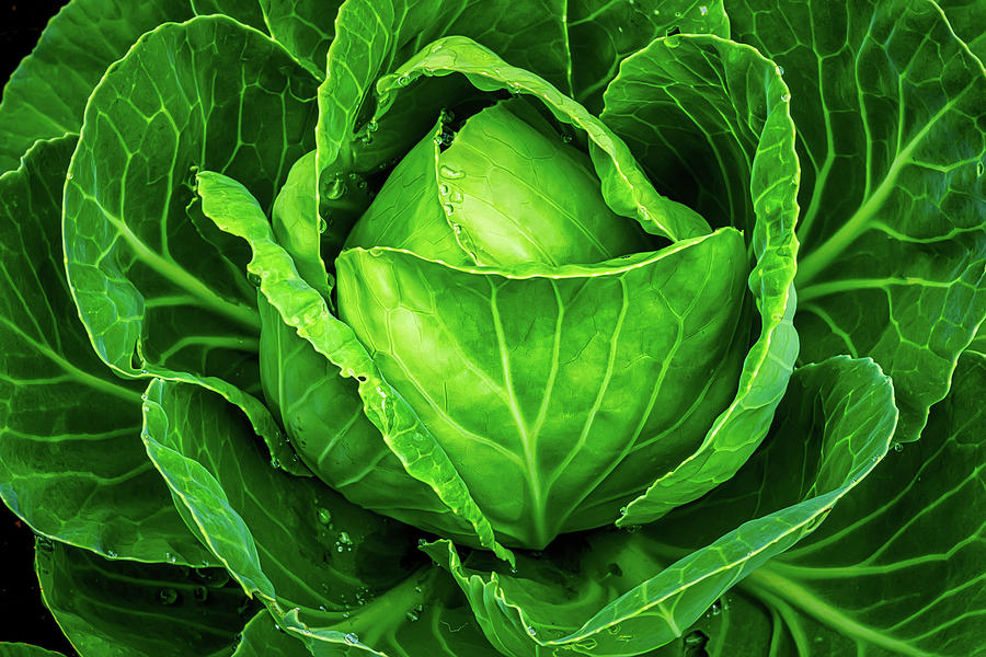 Cabbage Up Close by Gary Slawsky