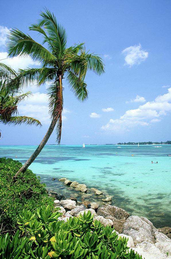 Cable Beach And Palm Tree, Nassau Photograph by Hisham Ibrahim