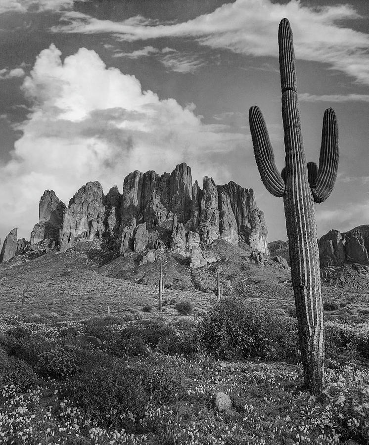 Cacti And Superstition Mts. Photograph by Tim Fitzharris