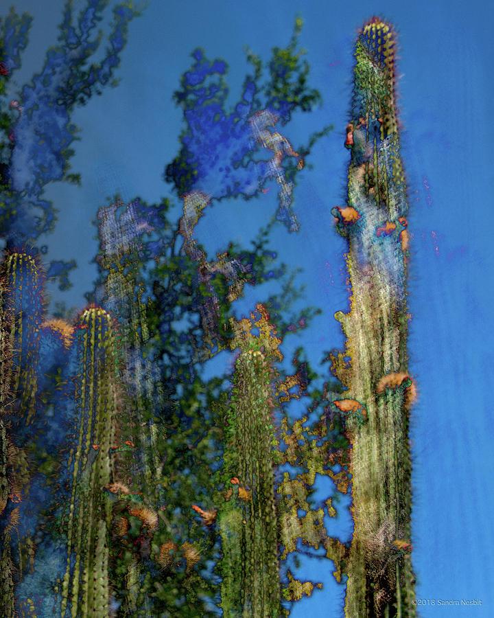 Cacti with Orange Balls on Blue by Sandra Nesbit