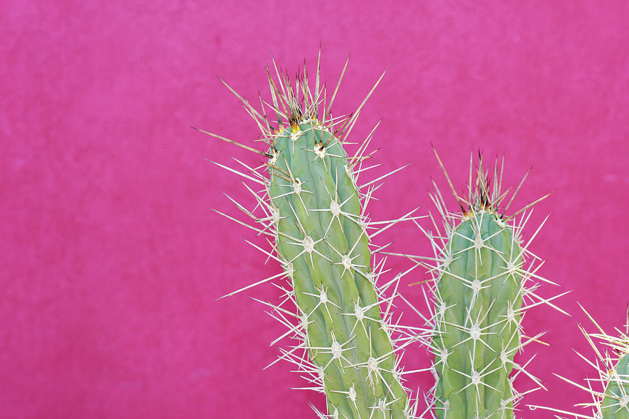 Cactus Against A Bright Pink Wall Photograph by Tracy A. Flaming