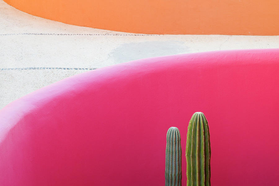 Cactus Against Pink Wall Photograph by Pixelchrome Inc