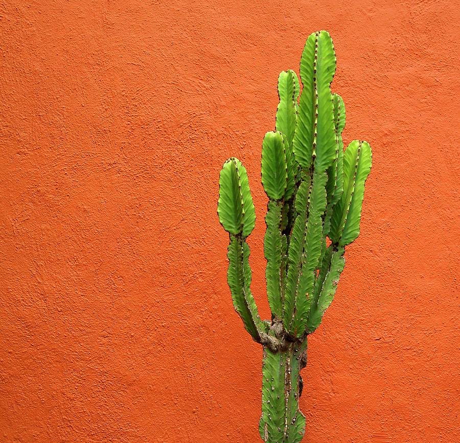 Cactus And Orange Wall Photograph by Mauricio Alcaraz Carbia Photography