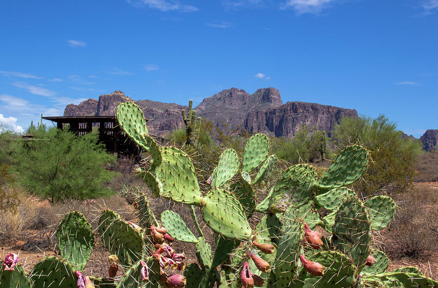 Cactus and the Superstition Mountains by Amy Sorvillo