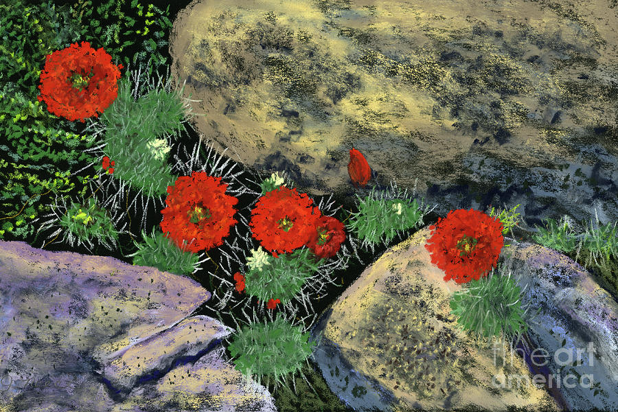 Cactus Blooms Among the Rocks by Ginny Neece