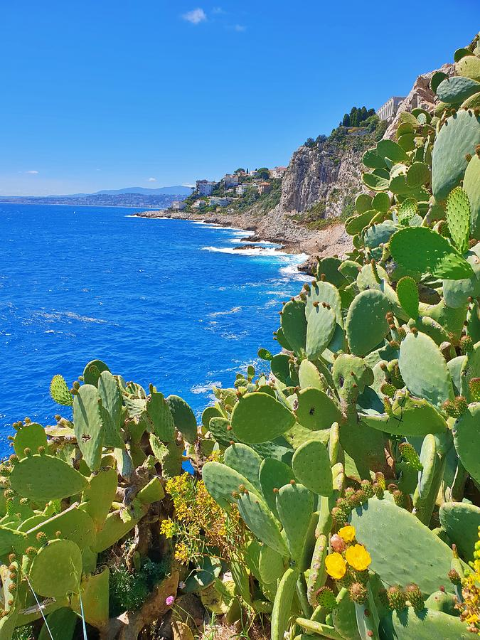Cactus Coastal View by Andrea Whitaker